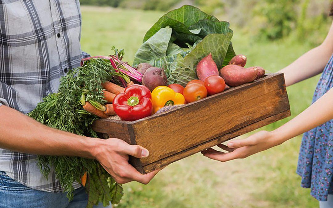 cagette de légumes transmise du producteur au consommateur